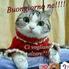 Animals And Pets, Funny Animals, Italian Memes, Good Morning Good Night, New Years Eve Party, True Love, Adoption, Genere, Taxi