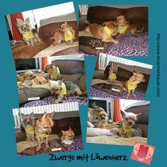 Come & see at:  http://casabangor.wix.com/zwerge-mit-loewenherz#!