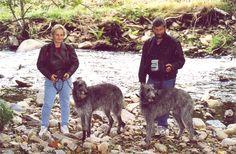 Spaziergang 2003 mit Deerhounds Du Triple Bois