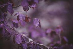 paarshooting regenshooting