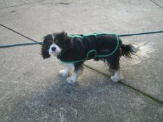 Brutus Dog Coats, Dogs, Animals, Coats For Dogs, Animaux, Doggies, Animal, Animales, Pet Dogs