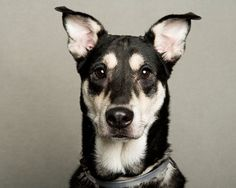 """Least Likely To Be Adopted"" Project  NYC-based photographer and artist LaNola Stone wanted to help her local animal shelter, so she created this photography series of the dogs who had been at the shelter for the longest time."