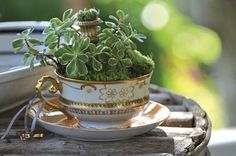 Gorgeous....I also think the tiny garden urn is hillarious.