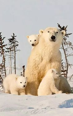 Bears Wild Animals Pictures, Animal Pictures, Nature Animals, Animals And Pets, Beautiful Creatures, Animals Beautiful, Animals Amazing, Tier Fotos, Cute Baby Animals