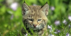 Please sign!!! Protect Wildlife From Killing Contests!!