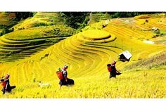 Sa Pa en Tỉnh Lào Cai