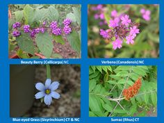 What native plants are in your backyard?