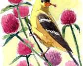 ACEO Limited Edition  1/25- Goldfinches with red clovers - Art print of an ACEO original watercolor painting by Anna Lee