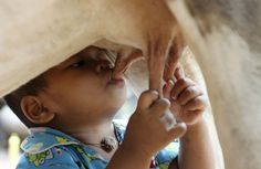 Tha Sophat suckles milk from a cow in Nokor Pheas village, 195 miles from the Cambodian capital. The 18-month-old toddler began suckling directly from a cow as part of his daily meals since his parents left to work in Thailand, 2011 - by Reuters