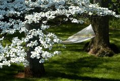 Blossom trees & rest