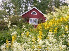 012 In the flower garden Småland, Sweden