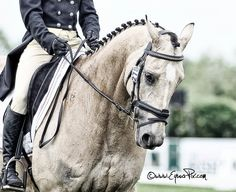 How gorgeous is this horse??