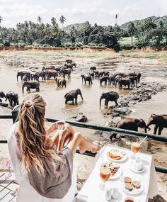 A dream come true... to travel the world and see animals in their natural environment. IMAGINE eating out here with this view!!