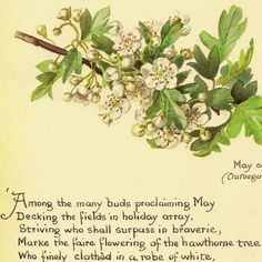 May flowers ~ Edith Holden