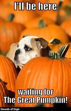 I'll be here waiting for the Great Pumpkin cute autumn fall dog pumpkin halloween great pumpkin