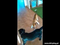 Nelito e Doris em cachorros