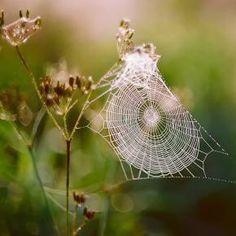 Spiderweb - Pixdaus   *g