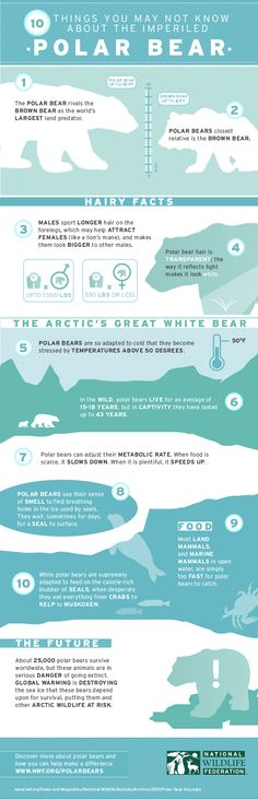 10 Things You May Not Know About Polar Bears - Happy Polar Bear Day!