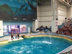Dolphinarium Constanta, Romania. #dolphins #dolphinarium #romania Constanta Romania, Dolphins, Outdoor Decor, Pictures, Photos, Common Dolphin, Seal, Grimm