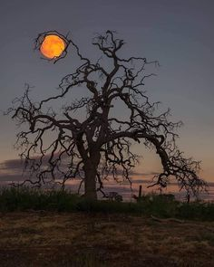 'Holding up the Moon' by Eric Houck. What an incredible photo! I love the gnarled twisted branches exposed so vividly in the evening sky. Pixel Art, Lasso The Moon, Mandala, Spooky Trees, Evening Sky, Kare Kare, Picture Credit, Latest Pics, Full Moon