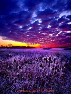 Morning Light by Phil Koch via flickr