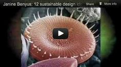 Janine Benyus: 12 sustainable design ideas from nature - Biomimicry Designs