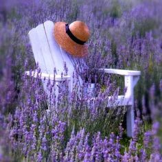 Wouldn't you love to sit in that chair surrounded by lavender?