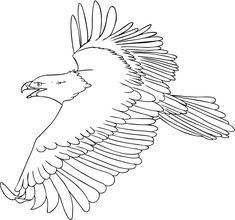 Eagles Coloring Pages Bald Eagle Color Page 7
