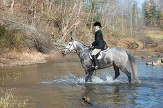 Horse riding through water.