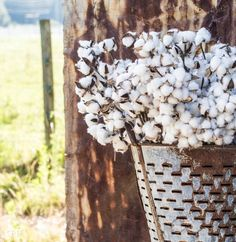 Building a Barn for my antique shop and couldn't wait to snap a few pictures. Vintage Olive Basket filled with Cotton overlooking the farm.