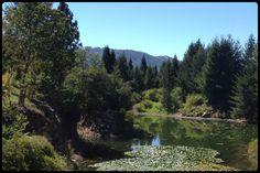 Quarryhill Botanical Glen Ellen
