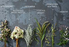 Foxtails for centrepieces with white.
