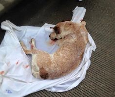 Wounded dog saved by off-duty firefighters and paramedic