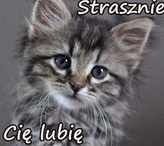GIFY I OBRAZKI: LUBIE CIĘ Cats, Animals, Graphics, Gatos, Animales, Animaux, Graphic Design, Animal, Printmaking