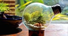 5 Step Guide: Air Plant Decorating