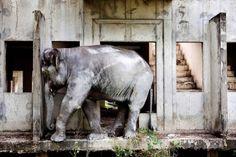 Appartement abandonné en Thailande - Il y a des pays comme ça, où certains bâtiments ne sont jamais finis, et où les éléphants peuplent les rues bondées de touristes.