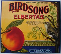 BIRDSONG Vintage Thomaston, Georgia Peach Crate Label, square