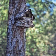 Photos Of Jack Hannau0027s Log Cabin