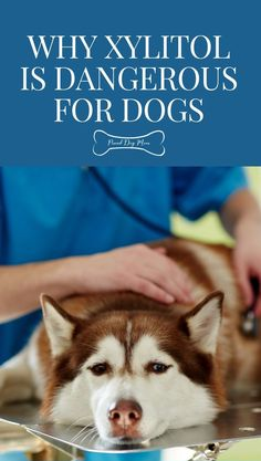 The Danger of Xylitol for Dogs | Dog Health Tips | Dog Care | Dog Health Tips, Dog Health Care, Diy Dog Toys, Dog Nutrition, Dog Facts, Dog Care Tips, Dog Treat Recipes, Dog Quotes, Dog Training Tips