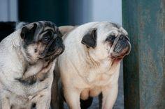 La mia foto per il concorso Best Breed Gemelli Diversi. Clicca sulla foto e vota anche tu. Primo premio: un anno di fornitura Best Breed per il tuo cane!