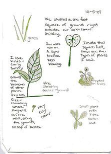More About Nature Journalling