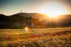 Deutsch Richárd owes his first Prime sale to a curious ladybug that decided to crash a wedding shoot in a wheat field. S Stories, Wedding Shoot, Homeland, Hungary, Countryside, To Go, Mountains, Sunset, Places