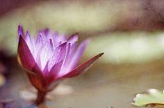"""""""Lily Pond"""" by Joel Olives. www.joelolives.com"""