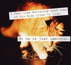 How the heck did Buttercup survive everything? Immortal cat?
