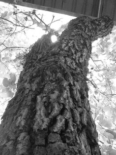 Contraste- Clara K.T.-8anoC - Ao realizar essa foto eu procurei focar no contraste da árvore com o céu com as folhas da árvore. Nessa foto podemos observar como o tronco escuro da árvore se destaca sobre o céu e as folhas claras, criando assim um primeiro e um segundo plano contrastantes.