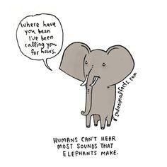 I've got some bad news about elephants.