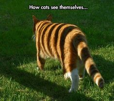 Cats Have High Self - Esteem