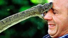15 Most Dangerous Animals In The World - Published on Aug 28, 2015. From venomous snakes to the puffer fish, we count the 15 most dangerous animals in the world.