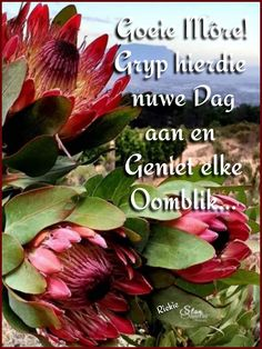 Morning Inspirational Quotes, Inspirational Thoughts, Lekker Dag, Goeie Nag, Goeie More, Afrikaans Quotes, Deep Thoughts, Flora, Greeting Cards