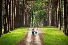 pine forest - reminds me of family walks